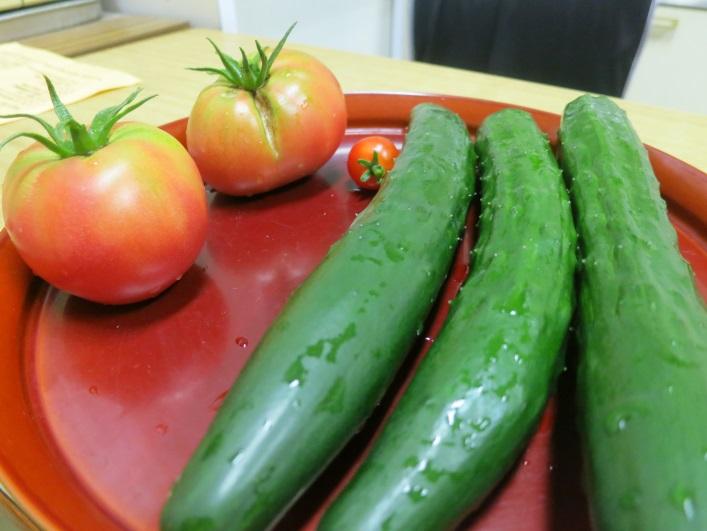 収穫した野菜